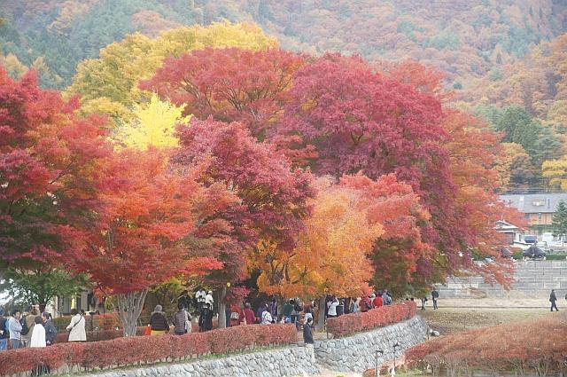 20101114_05_kairo.jpg