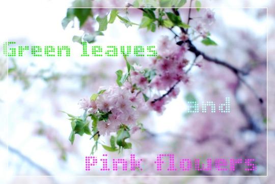 葉っぱと桜