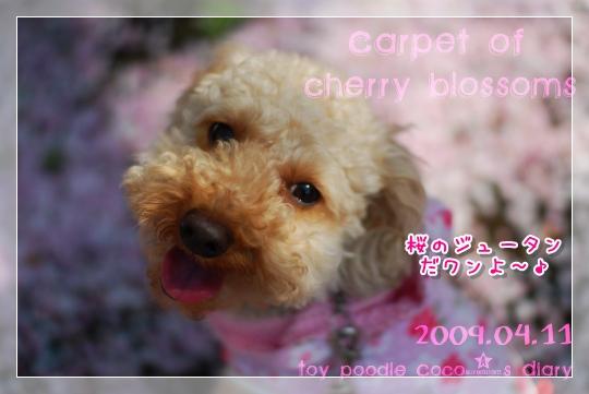 桜の絨毯2