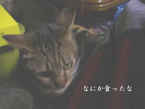 2008-1-16-6.jpg