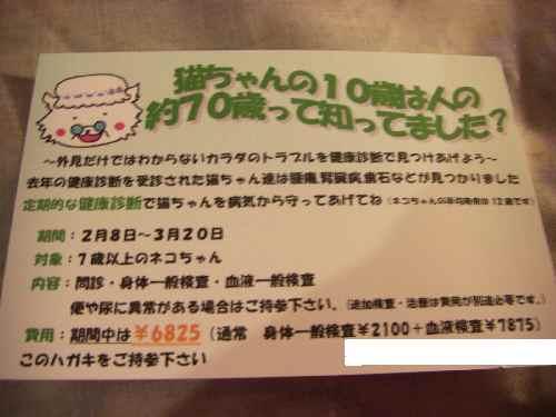 2008-2-3-4.jpg