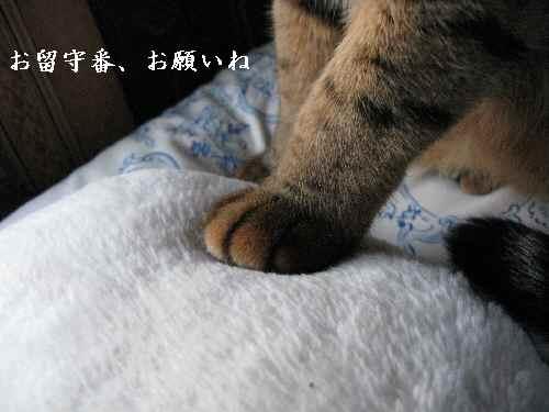 2008-3-19-2_20080319224039.jpg