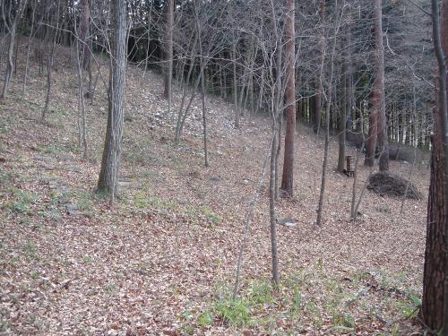 カタクリの丘