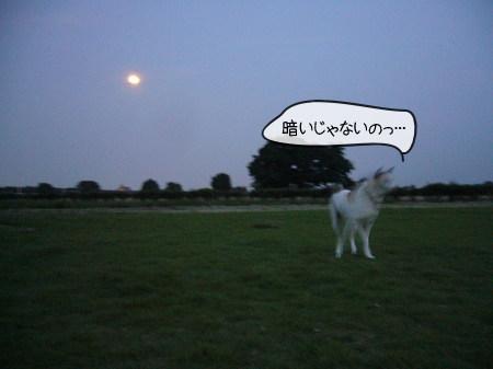 2008-09-14-1.jpg