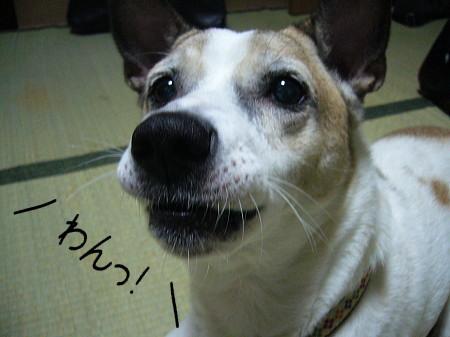 2008-09-14-8.jpg