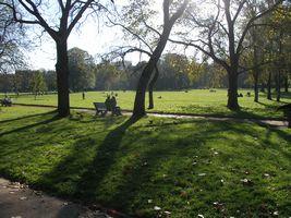 テットドール公園の芝生
