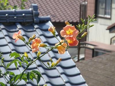 花・植物 853