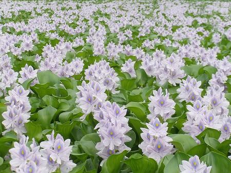 花・植物 859