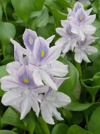 花・植物 858