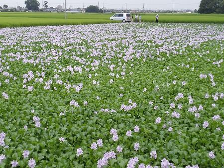 花・植物 854
