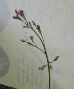 花・植物 889