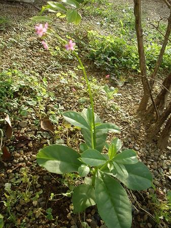 花・植物 874