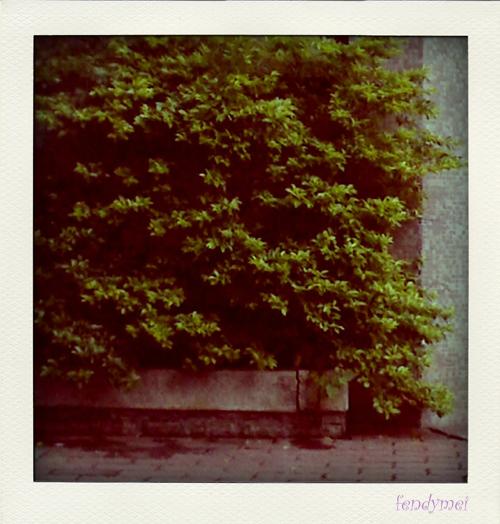 14-04-09_1753-pola.jpg