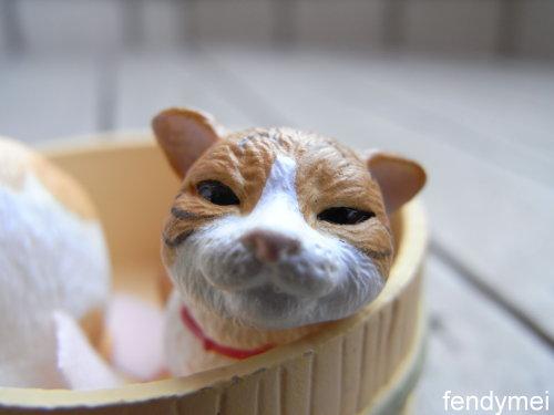 cat090701-3.jpg