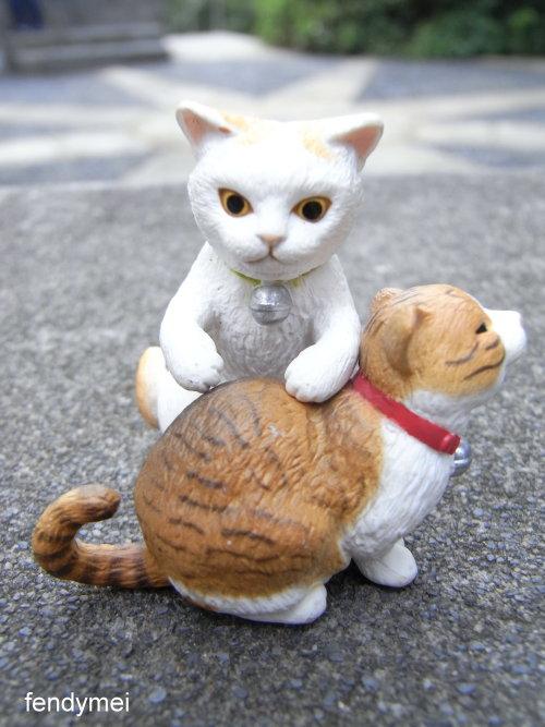 cat090701-6.jpg