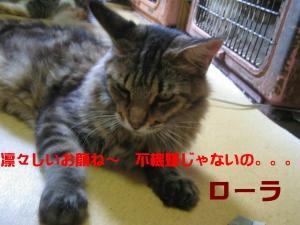 IMG_3393_convert_20080926165645.jpg