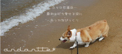 corgi03_5.jpg