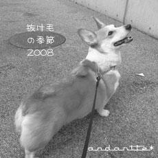 corgi10_1.jpg