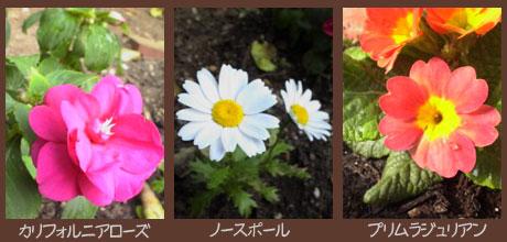 庭の花0605その1