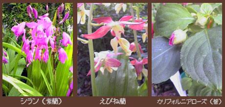 庭の花0605その2