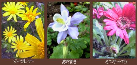 庭の花0605その3