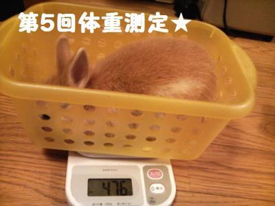 第五回体重測定