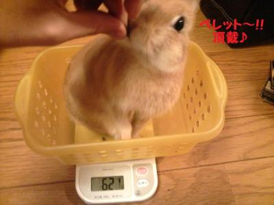 第7回体重測定2