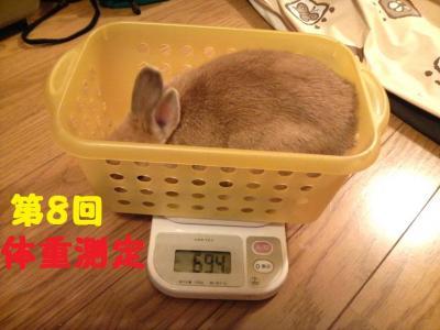 第8回体重測定