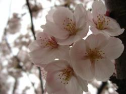 2008.3 お花見オフ 113