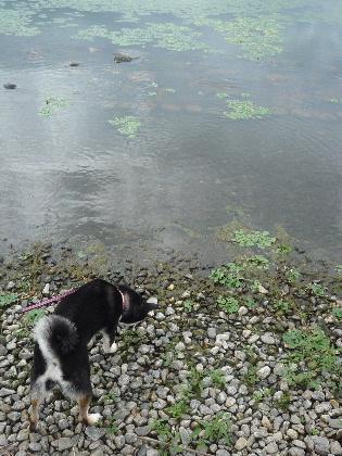 725-諏訪湖水際