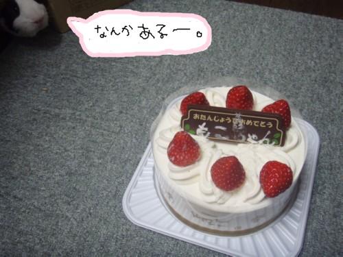 cake092.jpg