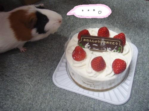 cake093.jpg