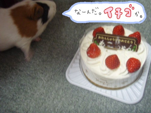 cake094.jpg