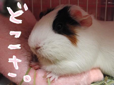 msukibubun1.jpg