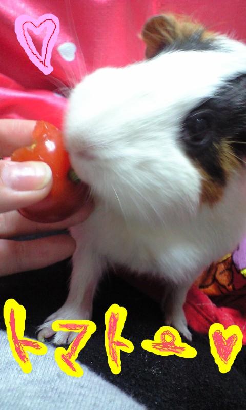 tomato0.jpg
