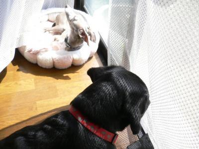 フカフカに寝てる~。