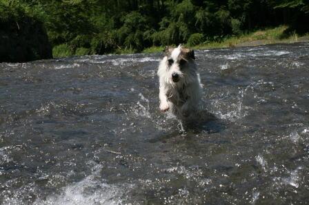 水の中を走るもも(1)