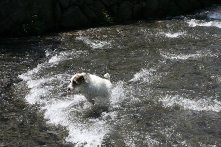 水の中を走るもも(2)