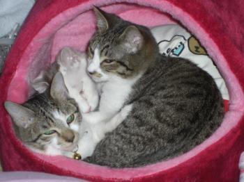 満員の猫ベッド