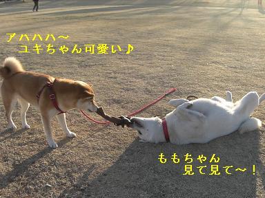 ユキちゃん可愛い
