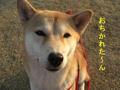 おちかれ0202.