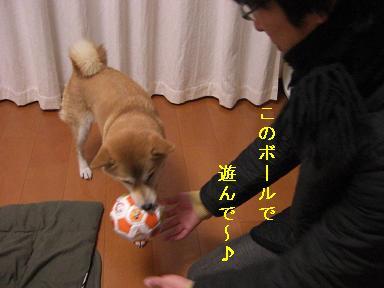 ボールで遊んで