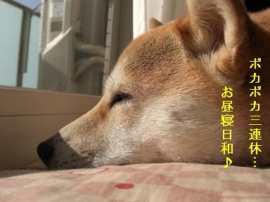 お昼寝日和