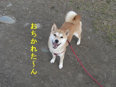 おちかれ0401