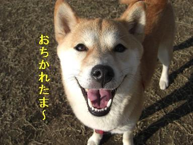 おちかれ0402