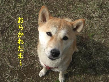 おちかれ0406