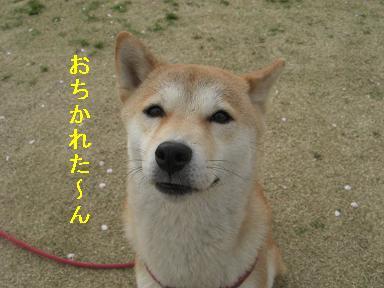 おちかれ0409