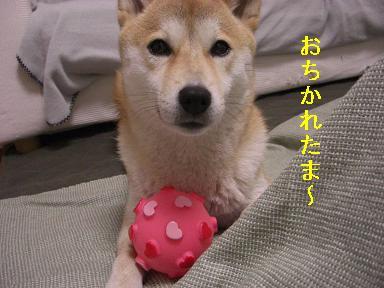 おちかれ0415