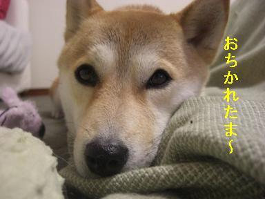 おちかれ0417