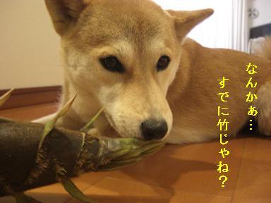 竹じゃね?
